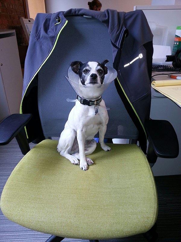 Dog Friendly Workplaces Canada