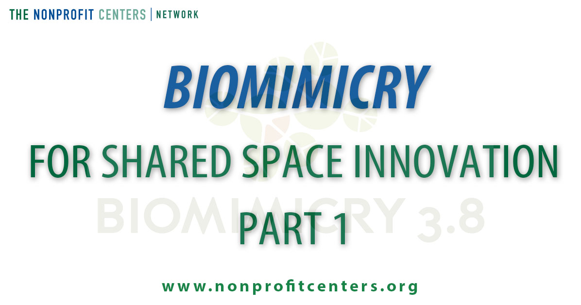 biomimicryblog.jpg