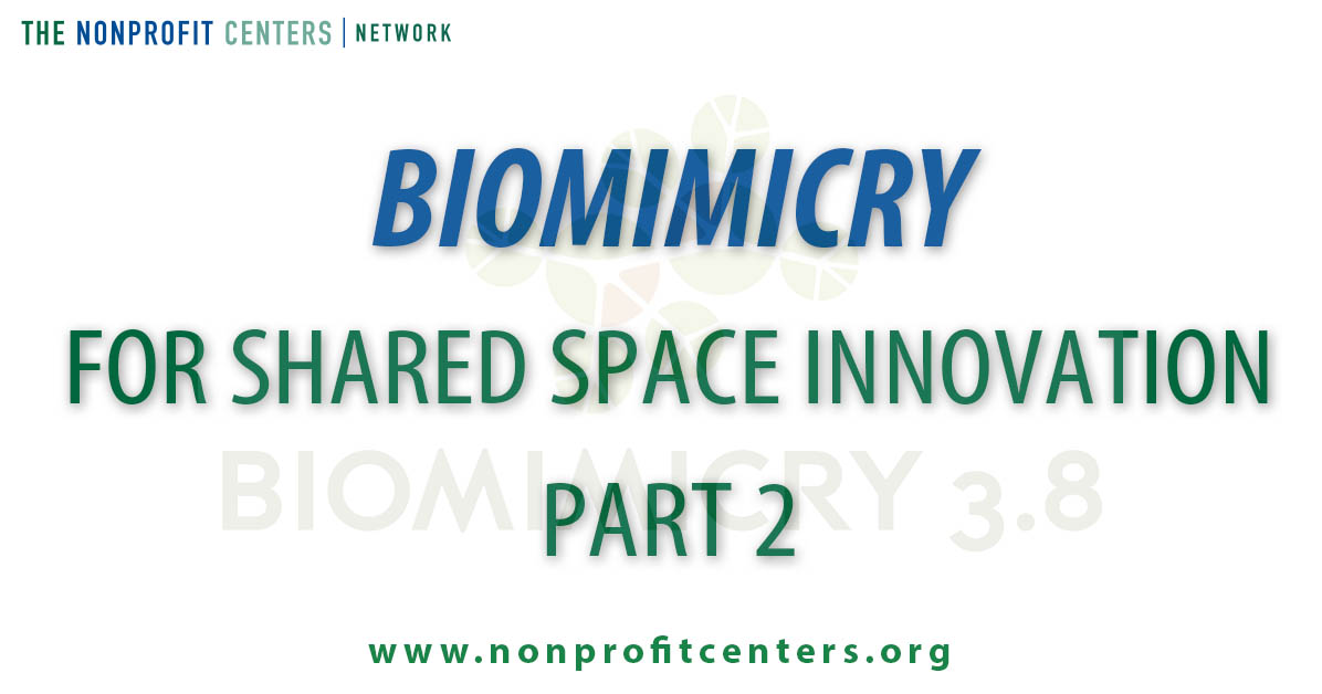 biomimicryblogpart2.jpg